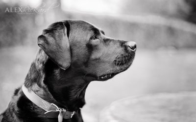 A Dog Walk – Pet Photography Sussex