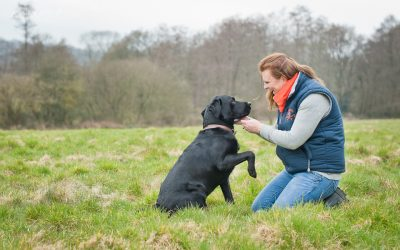 One woman and her dog. . .Sussex Pet Photography