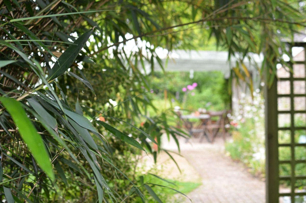 Looking though greenery at Borde Hill Garden